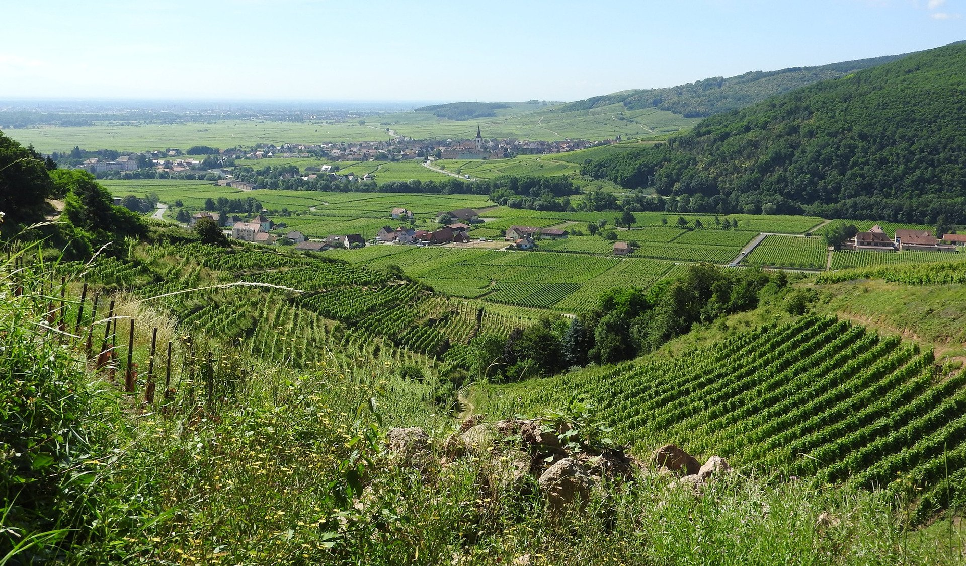 wine-private tour-Alsace-France-Strasbourg