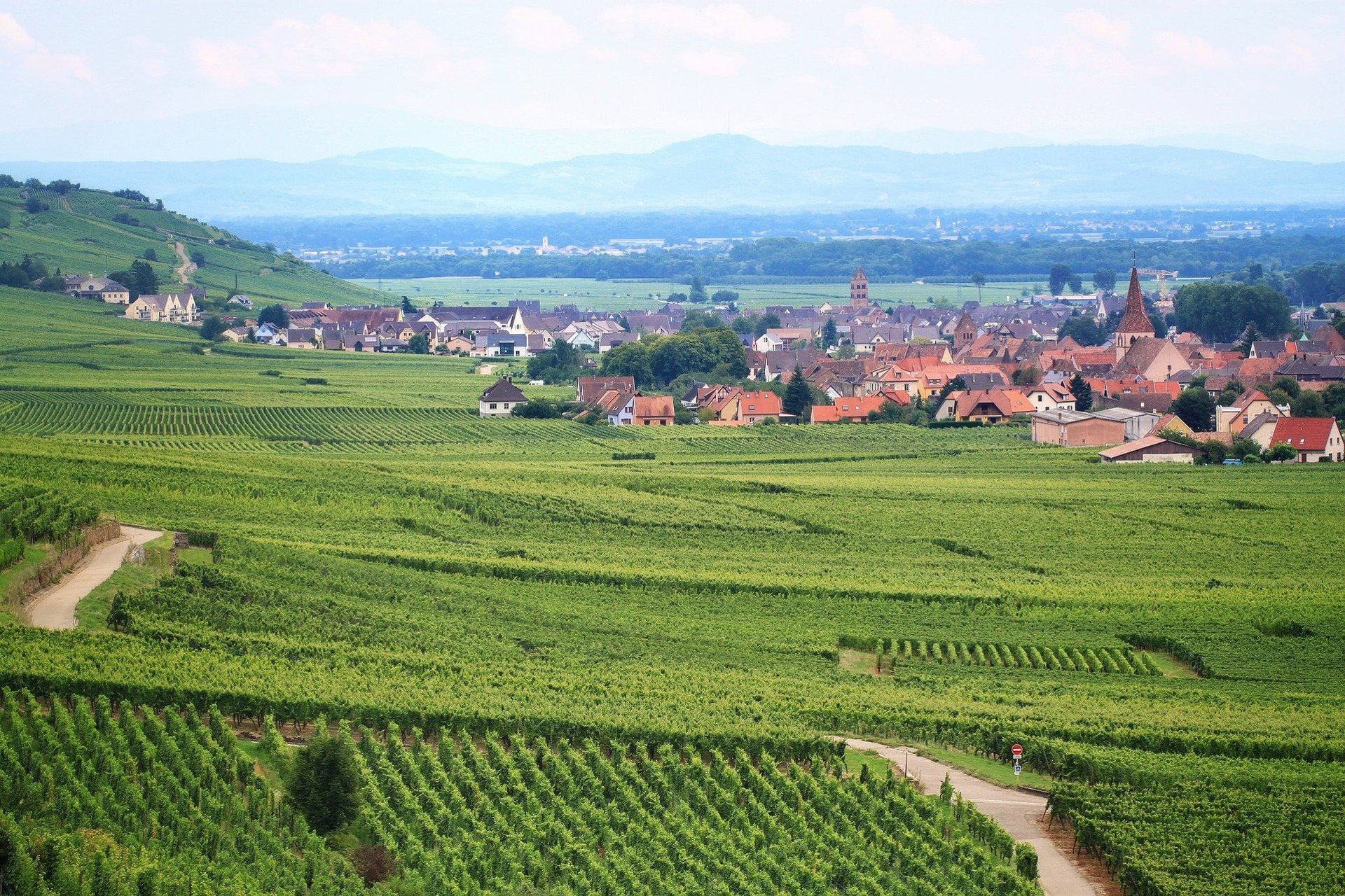 vineyard-wine-private tour-Colmar-Alsace-France