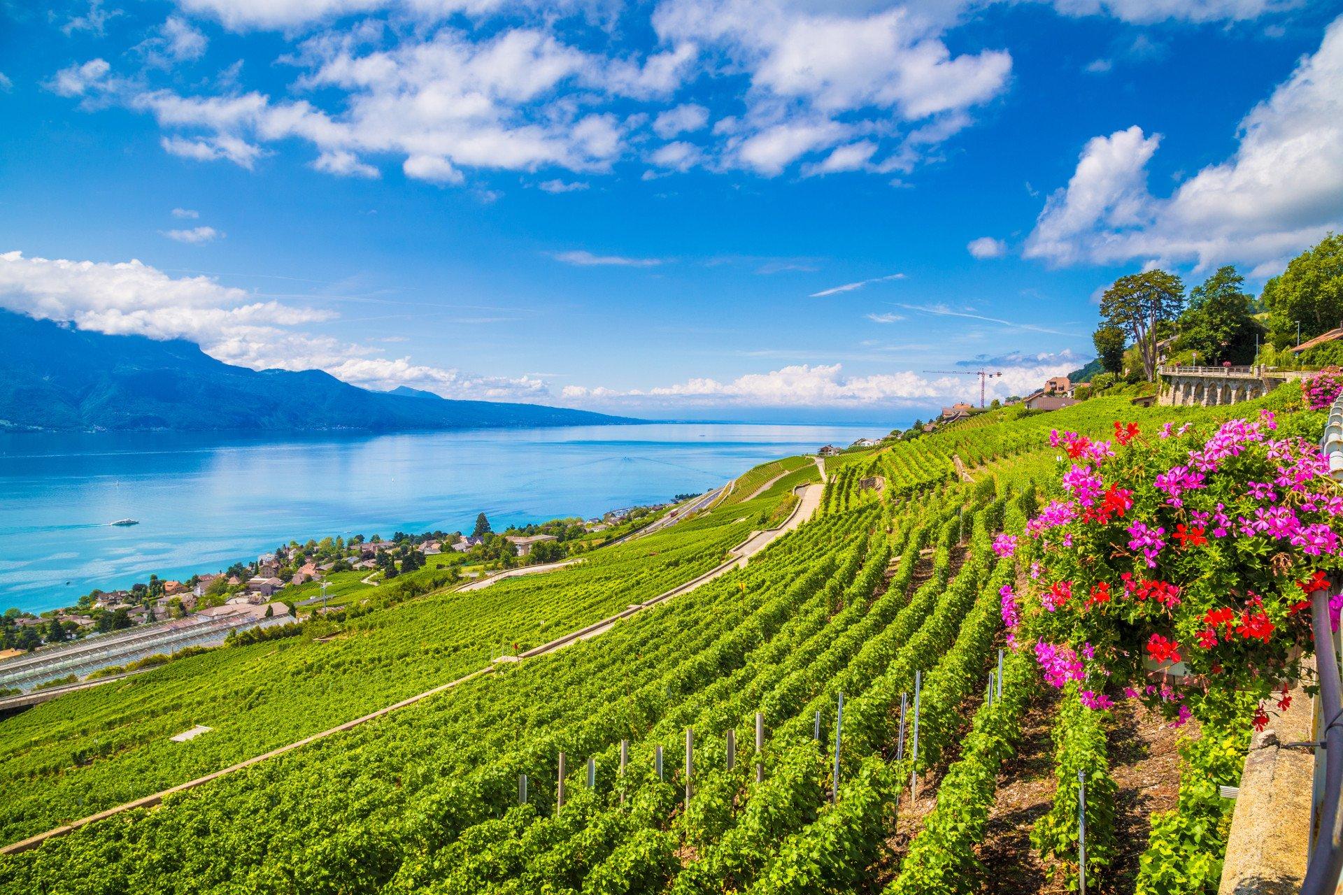 vignes-dégustation-visite privée-Lavaux-Suisse-Lac Léman