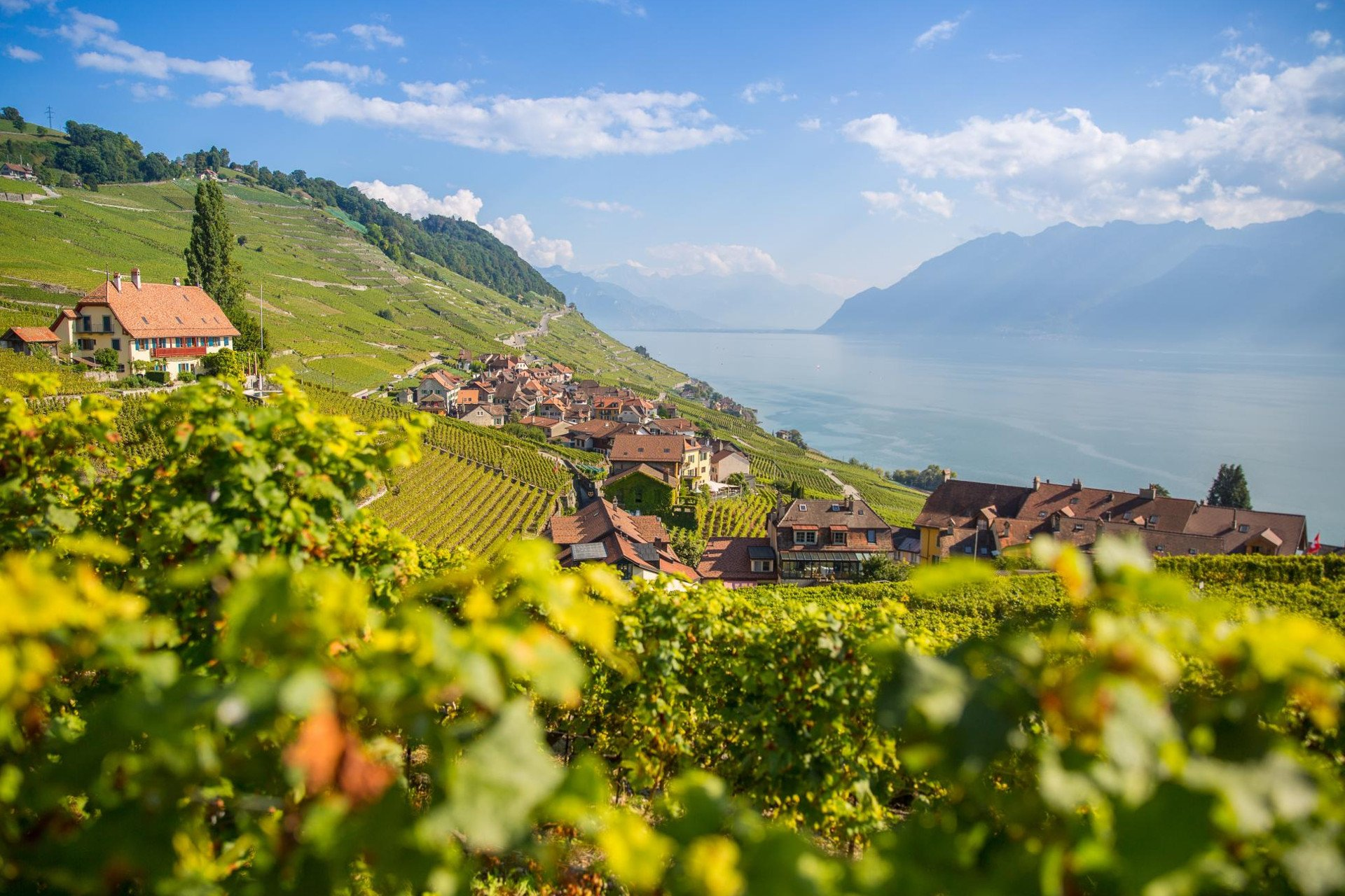 Suisse-switzerland-lavaux-vaud-private tour