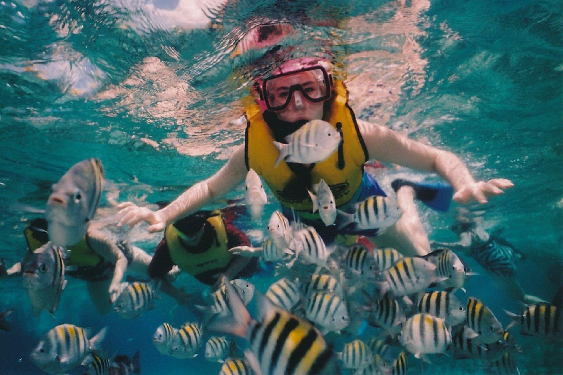 un plongeur dans une eau limpide entouré de nombreux poissons