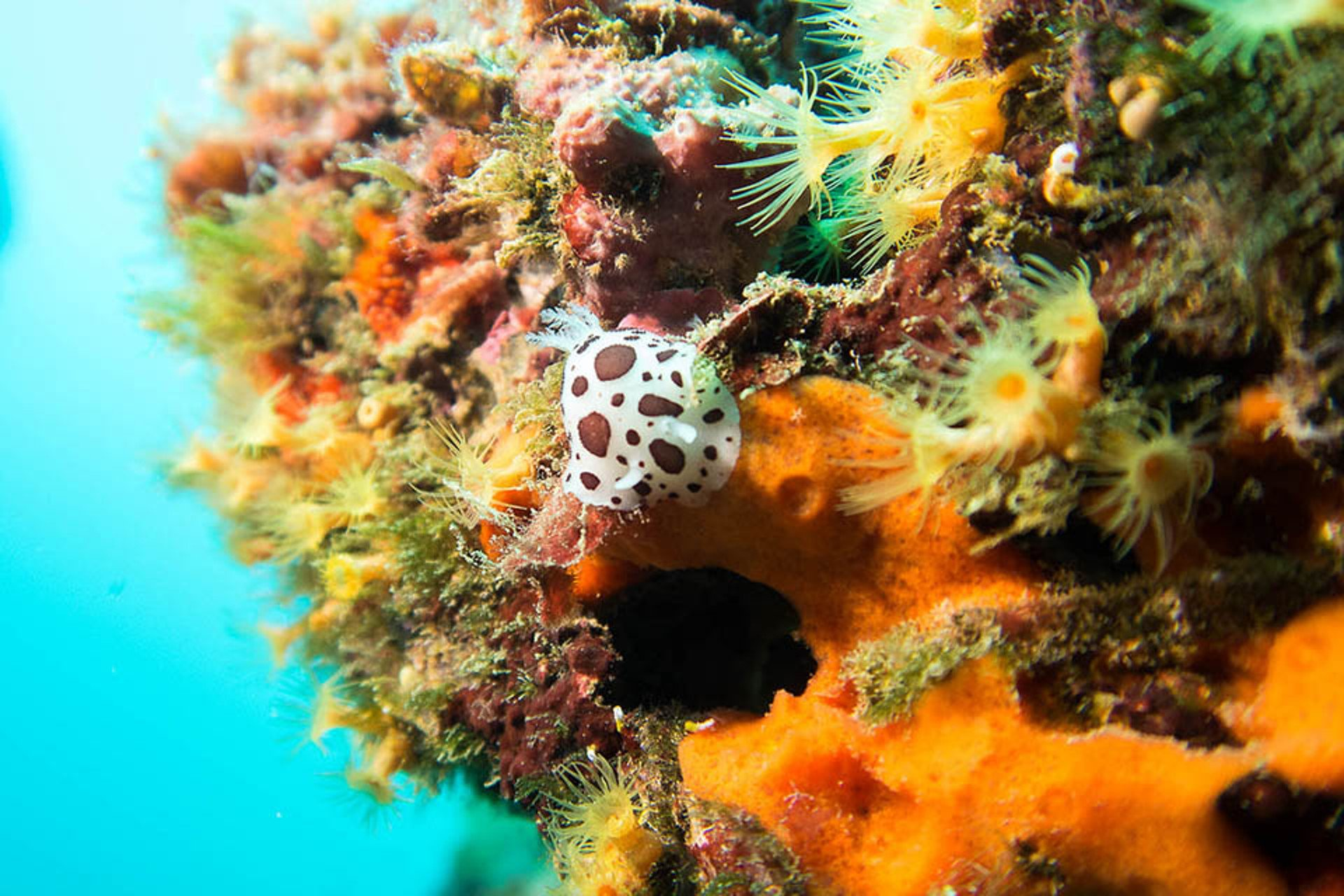 colourful underwater fauna and flora