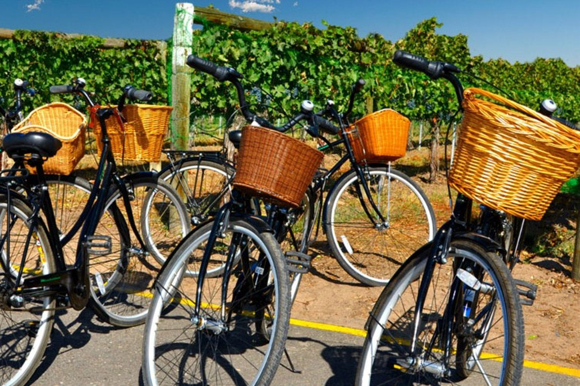 bicycles with wooden baskets in wineyards
