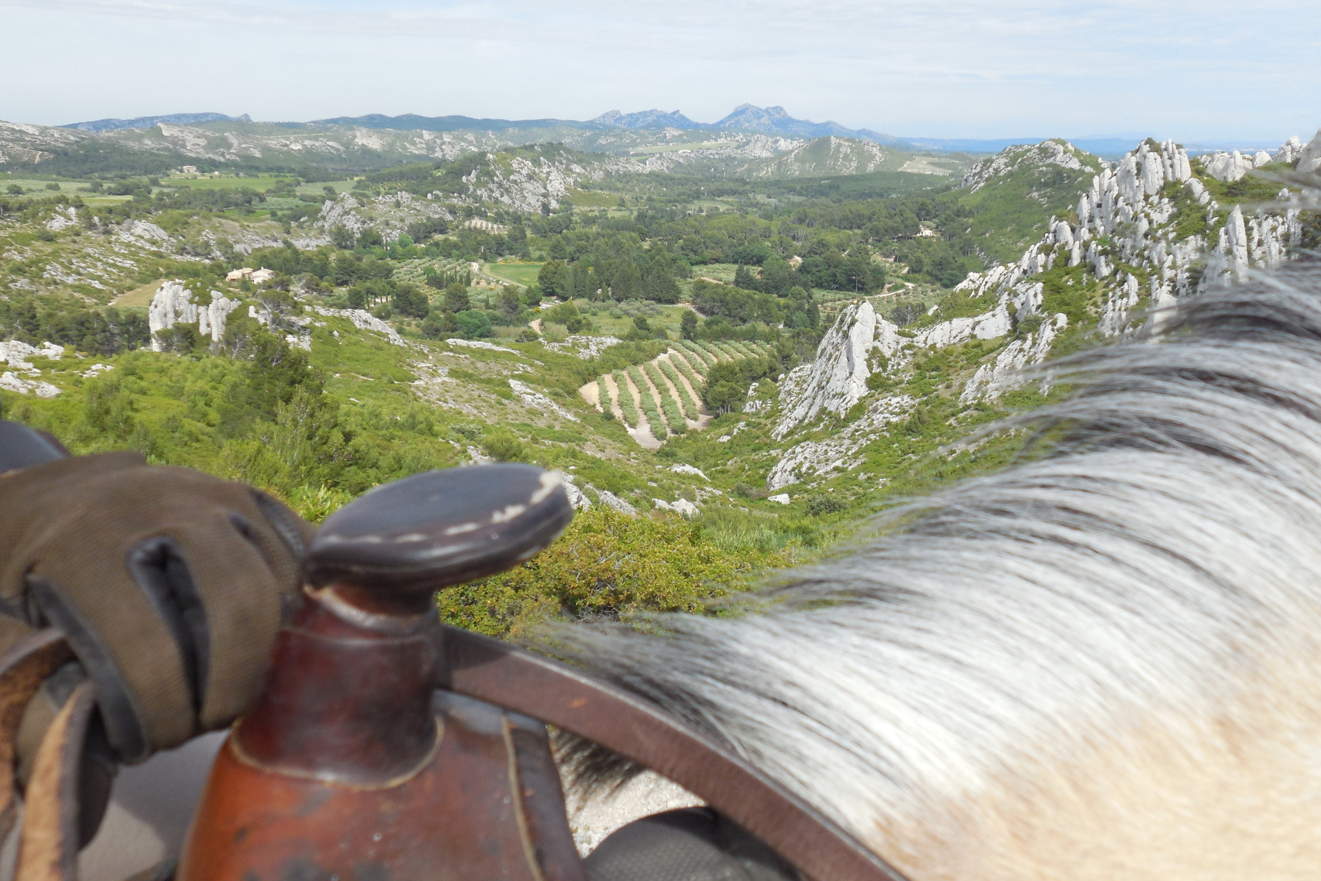 alpilles view from the back of a white horse