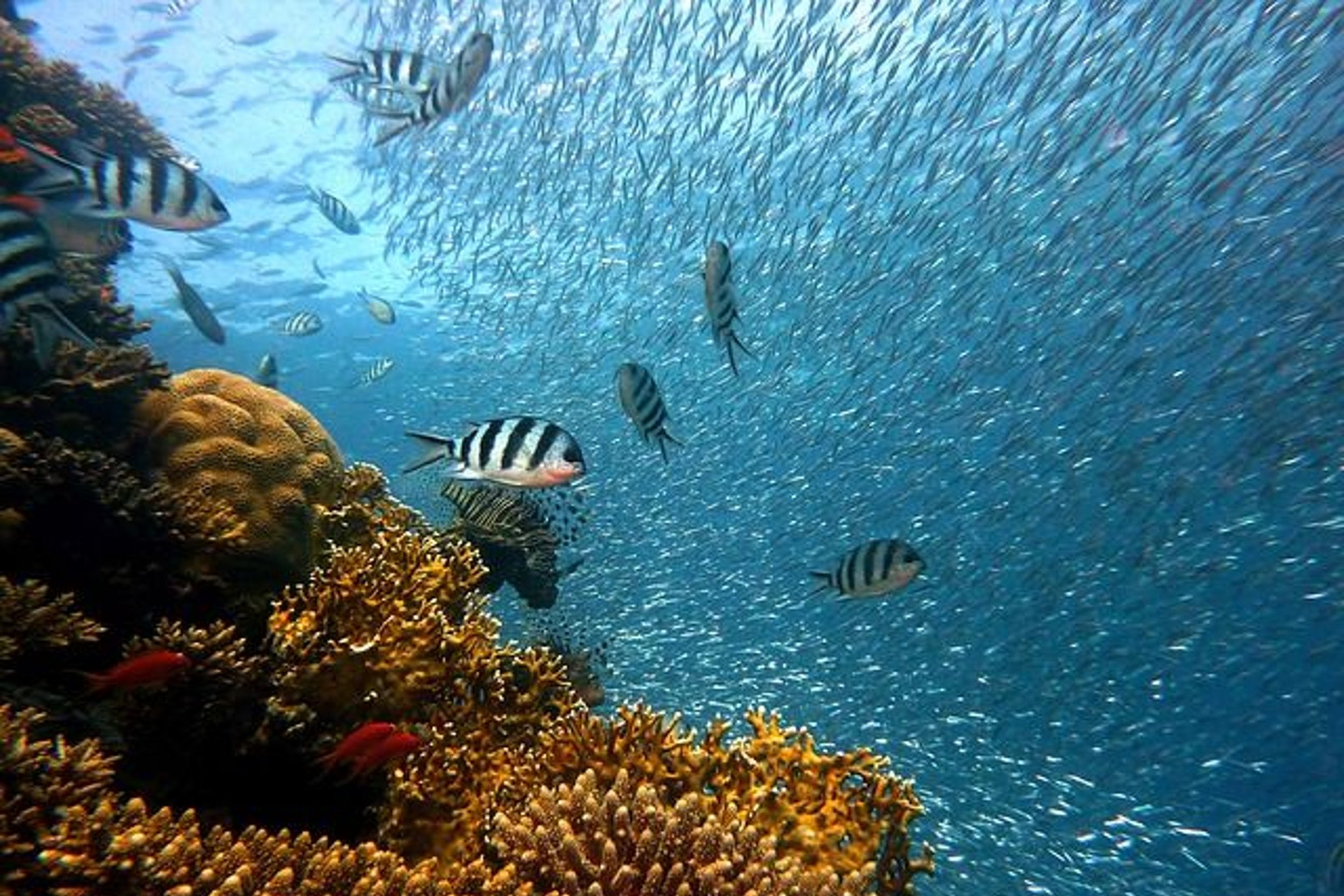 school of fish and corals in clear water
