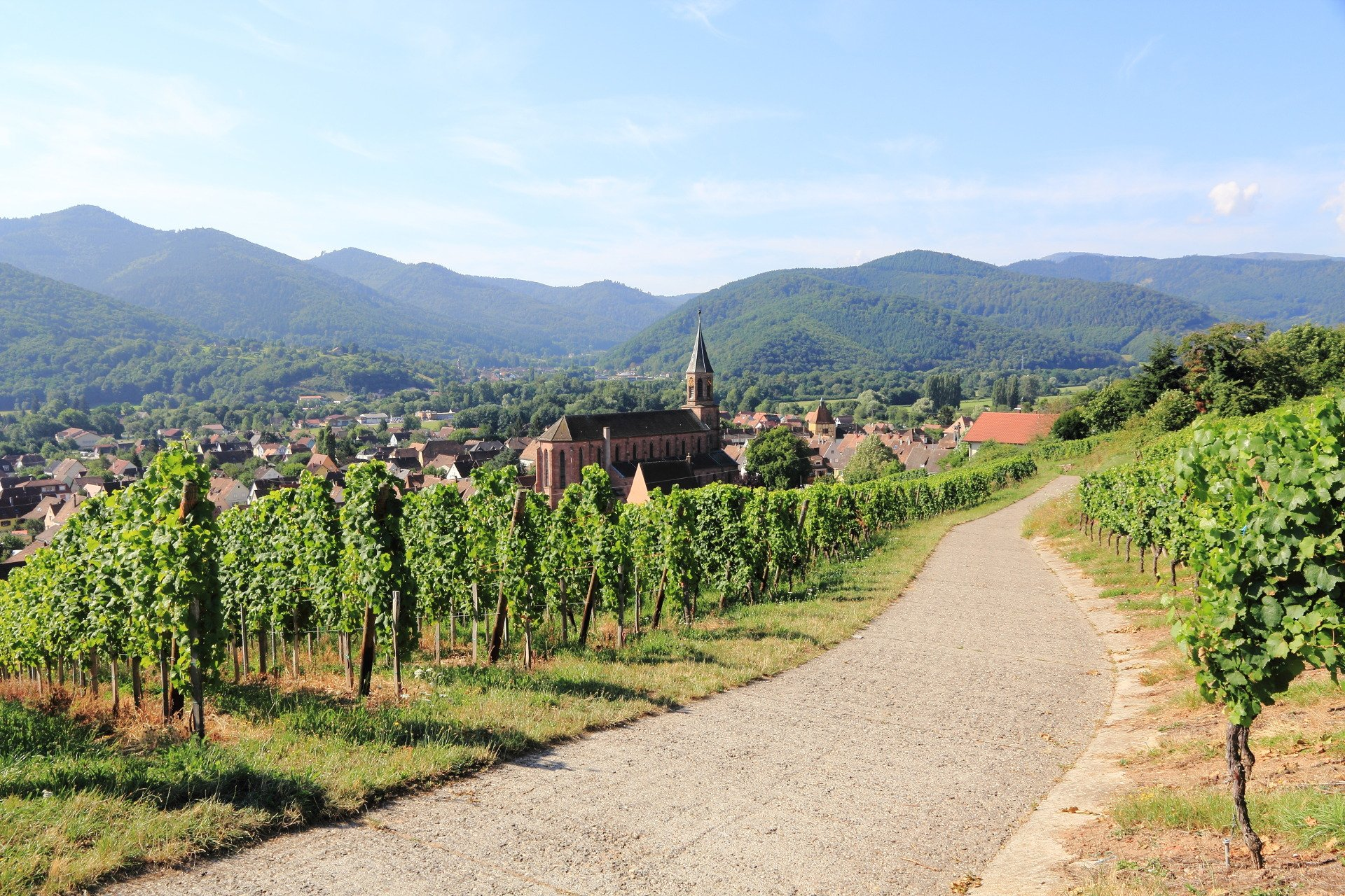 wine-road-private tour-Alsace-France-Colmar