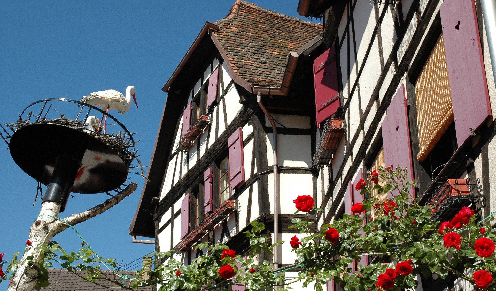 stork-private tour-Alsace-France-Strasbourg